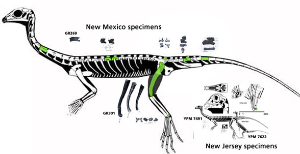 giant New Mexico Tanytrachelos